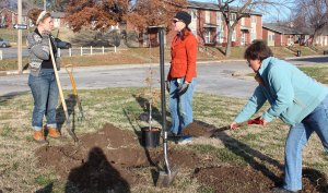 Cathy Bylinowski, program manager for Juniper Farms Training Center, firms up a newly planted Overcup oak.